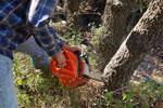 Prawnik-Rodzinny - Inne zagadnienia - Zasady wycinki drzew na prywatnej posesji po kolejnej nowelizacji - wycinka drzew, prywatna posesja
