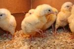Stawki VAT - Stawka VAT na us�ugi chowu zwierz�t na zlecenie - ch�w zwierz�t, stawki VAT