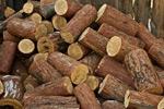 Serwis Budżetowy - Inne jednostki i zakłady budżetowe - Klasyfikacja paragrafowa dochodów powiatu ze sprzedaży drewna opałowego, pochodzącego zwycinki drzew - klasyfikacja budżetowa, sprzedaż drewna opałowego, wycinka drzew