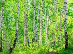 Podatek od gruntów leśnych w 2014 r.