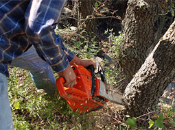 Zasady wycinki drzew na prywatnej posesji po kolejnej nowelizacji