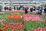 Podatek VAT - Obrót krajowy - Sprzedaż roślin przez rolnika ryczałtowego - zwolnienie z VAT, sprzedaż roślin, rolnik ryczałtowy