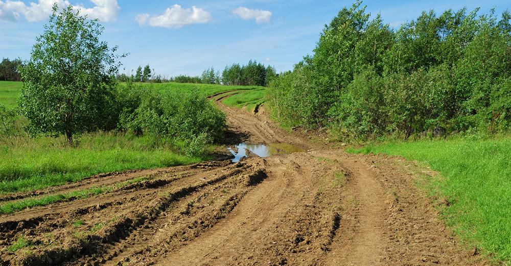 Dotacje na inwestycje związane zekosystemem leśnym